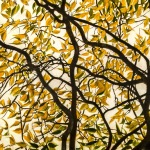 Branches-and-leaves-28-x-84