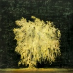 Ghost-tree-Willow