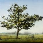 St-Andrews-Tree-North-16x20