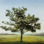 St-Andrews-Tree-West-16x20