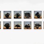 Tree grid, 12 panels (complete series)-Edit