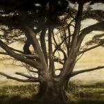 Tree, 8'x18'