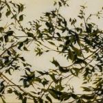 Leaves #1 20x25.jpg
