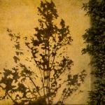 Wall shadow Kuhn 4x6