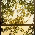 Window on a world of shadows 2, 48x38