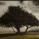 fix-single tree Kos 07
